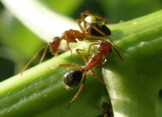 μαύρα μυρμήγκια σεξ σεξ Ντους Sex