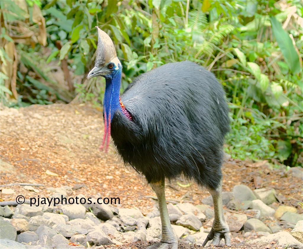 μεγάλα πόδια πουλί