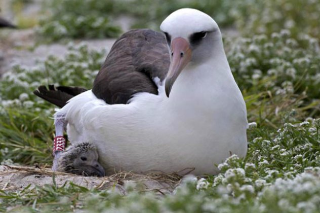 το μεγαλύτερο πουλί στον κόσμο φωτογραφίες
