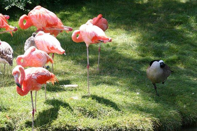 αστεία μεγάλα αστεία πουλί