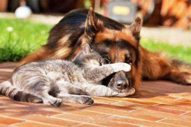 Αποτέλεσμα εικόνας για γατες σκυλος
