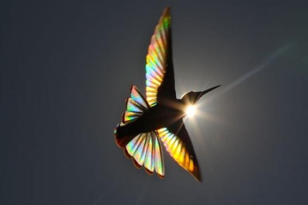 Αποτέλεσμα εικόνας για Ο ήλιος «βάφει» πουλί στα χρώματα του ουράνιου τόξου