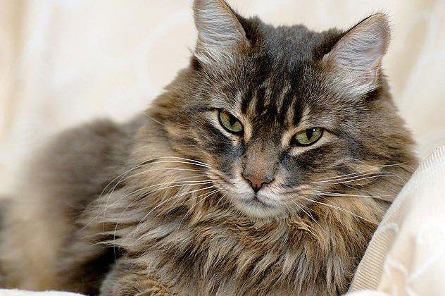 06af8220d709 Οι γάτες και οι σκύλοι ήταν και θα είναι αιώνιοι εχθροί για μια ζωή.  Ωστόσο