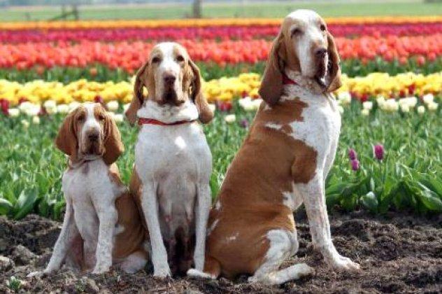 025e992641dc Υπάρχουν ράτσες σκύλων τις οποίες δεν βλέπουμε καθημερινά στον δρόμο και  δεν θεωρούνται ιδιαίτερα δημοφιλείς στους λάτρεις των κατοικιδίων.