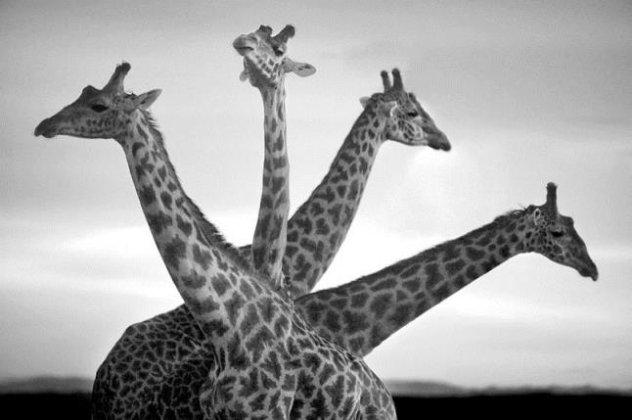 Αποτέλεσμα εικόνας για Αφρικη φωτογραφιες