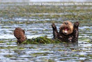 Διαγωνισμός φωτογραφιών για το πιο αστείο ζώο της άγριας φύσης- Όταν η ζούγκλα έχει κέφια (ΦΩΤΟ) - Κυρίως Φωτογραφία - Gallery - Video