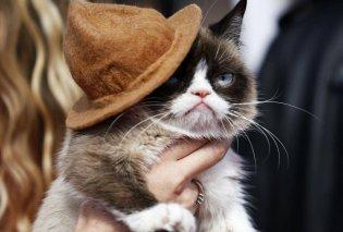 Η Grumpy Cat μόλις κέρδισε 710.000 δολάρια σε δικαστική διαμάχη με εταιρεία αναψυκτικών  - Κυρίως Φωτογραφία - Gallery - Video