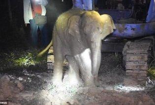 Βρήκαν μικρό ελεφαντάκι & του έσωσαν την ζωή σε πηγάδι βάθους τριών μέτρων (ΒΙΝΤΕΟ) - Κυρίως Φωτογραφία - Gallery - Video