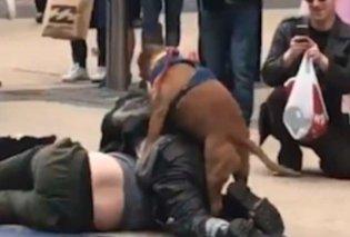 Απίστευτος σκύλος σταματάει τον καβγά δύο ανδρών με τον πιο απίθανο τρόπο (ΒΙΝΤΕΟ)  - Κυρίως Φωτογραφία - Gallery - Video