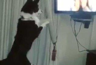 Απίστευτος σκύλος τρελαίνεται από χαρά όταν βλέπει την ιδιοκτήτρια του στην τηλεόραση (ΒΙΝΤΕΟ) - Κυρίως Φωτογραφία - Gallery - Video