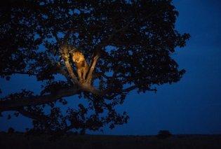 """Ο θαυμαστός κόσμος των ζώων όταν πέφτει το σκοτάδι- Ένα φωτογραφικό """"ταξίδι"""" που θα σας εντυπωσιάσει - Κυρίως Φωτογραφία - Gallery - Video"""