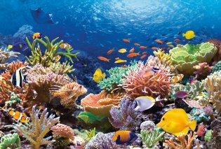 """Ένας εντυπωσιακός κοραλλένιος """"κήπος"""" στον κόλπο του Μεξικού (ΒΙΝΤΕΟ) - Κυρίως Φωτογραφία - Gallery - Video"""