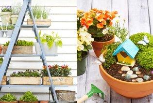 Μικρές ανθισμένες λεπτομέρειες κάνουν μεγάλη διαφορά στον κήπο ή το μπαλκόνι σας! (ΦΩΤΟ) - Κυρίως Φωτογραφία - Gallery - Video