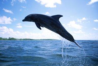 Το κορίτσι και το δελφίνι: Το εκπληκτικό βίντεο με το χαμογελαστό δελφίνι στη θέα της όμορφης κοπέλας (Βίντεο) - Κυρίως Φωτογραφία - Gallery - Video