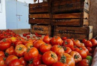 Οικοτεχνία δίνει δώρο 20 κούτες σάλτσας ντομάτας σε οποίον περιλούσει τους βουλευτές της συγκυβέρνησης  - Κυρίως Φωτογραφία - Gallery - Video