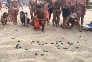 """""""Γεννητούρια"""" στην Κρήτη -«Έσκασαν μύτη» τα πρώτα χελωνάκια στα Φαλάσαρνα (φωτο) - Κυρίως Φωτογραφία - Gallery - Video"""