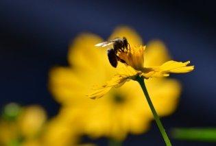 Μια μέλισσα μπορεί να εξαλείψει τα πλαστικά; - Ποιος είναι ο ρόλος ενός αυστραλιανού είδους - Κυρίως Φωτογραφία - Gallery - Video