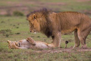 Φωτογραφίες άγριας ζωής 2018: 20+ αστείες εικόνες που θα φτιάξουν την μέρα σας!    - Κυρίως Φωτογραφία - Gallery - Video