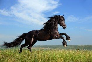 Το άλογο: Στη Φύση, τον Μύθο, την Τέχνη - Ένα σαγηνευτικό άρθρο για τον σύντροφο του ανθρώπου, στην ειρήνη & στον πόλεμο  - Κυρίως Φωτογραφία - Gallery - Video