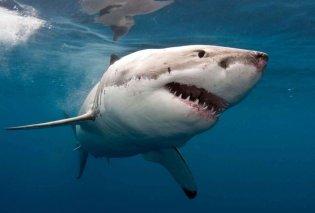 Τα σαγόνια του καρχαρία στην Αυστραλία ήταν θανατηφόρα: Θύματα μια 12χρονη και μια 46χρονη (Βίντεο) - Κυρίως Φωτογραφία - Gallery - Video