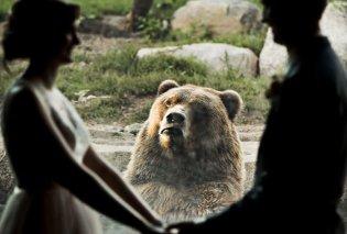 Το διαδίκτυο καταρρέει με την αντίδραση της αρκούδας στο ζευγάρι που αποφάσισε να παντρευτεί σε ζωολογικό κήπο - Κυρίως Φωτογραφία - Gallery - Video