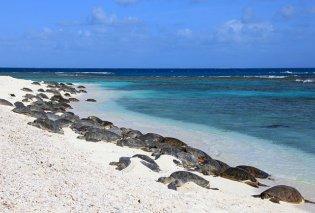 Ινδία: Χελώνες επιστρέφουν στην παραλία του Mumbai 20 χρόνια μέτα τον μεγαλύτερο καθαρισμό στον κόσμο - Κυρίως Φωτογραφία - Gallery - Video