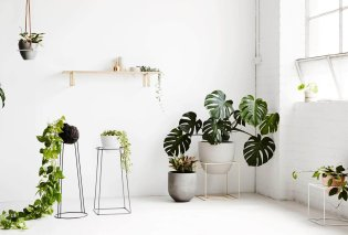 Καταπληκτικό άρθρο: Αυτά είναι τα φυτά που καθαρίζουν τον αέρα του σπιτιού μας από ρύπους και τοξικές ουσίες! - Κυρίως Φωτογραφία - Gallery - Video