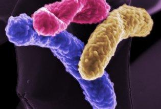 Σπουδαία επιστημονική ανακάλυψη: Τα βακτήρια του εντέρου παράγουν ηλεκτρικό ρεύμα! - Κυρίως Φωτογραφία - Gallery - Video