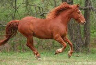To άλογο καλπάζοντας ορμάει σε μπαρ - Κατατρομαγμένοι τρέχουν να σωθούν οι θαμώνες (Βίντεο) - Κυρίως Φωτογραφία - Gallery - Video