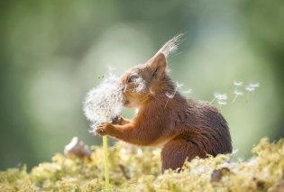Φωτογράφος ακολουθούσε σκίουρους για 6 χρόνια: Ιδού το αποτέλεσμα με τις 53 καλύτερες λήψεις του      - Κυρίως Φωτογραφία - Gallery - Video
