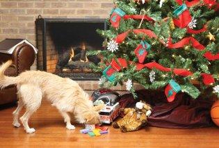 Απίστευτο: Σκύλος στολίζει χριστουγεννιάτικο δέντρο και είναι ότι πιο όμορφο έχουμε δει! - Κυρίως Φωτογραφία - Gallery - Video