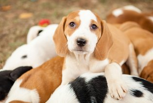 Κρήτη: Η σκυλίτσα που είχαν κλείσει σε φούρνο με τα κουτάβια της, κέρδισε τη μάχη - Ποιοι την υιοθέτησαν (Φωτό & Βίντεο) - Κυρίως Φωτογραφία - Gallery - Video