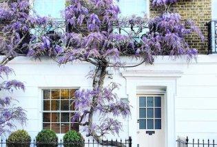 Καλλιτέχνιδα καταγράφει τις πιο όμορφες μπροστινές πόρτες του Λονδίνου: Υπέροχα λουλούδια & χρώματα - Φώτο  - Κυρίως Φωτογραφία - Gallery - Video