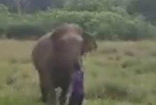 Βίντεο για γερά νεύρα: Ο ελέφαντας πατάει & σκοτώνει τον άνδρα που πάει κοντά του - Ακολουθεί δεύτερος - Κυρίως Φωτογραφία - Gallery - Video