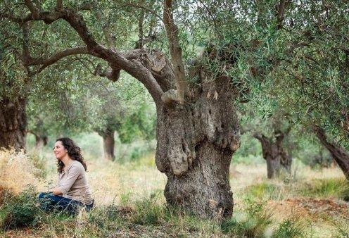 Χαλκιδική - Ψηφιακή υιοθεσία ελαιόδεντρου: Αγαπήστε και παρακολουθείστε από μακριά πώς μεγαλώνει το δέντρο σας (φωτό) - Κυρίως Φωτογραφία - Gallery - Video