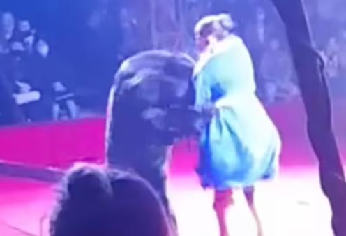 Ρωσία - βίντεο: Η στιγμή που μία αρκούδα επιτίθεται στην έγκυο θηριοδαμαστή - Επικρατεί πανικός - Κυρίως Φωτογραφία - Gallery - Video