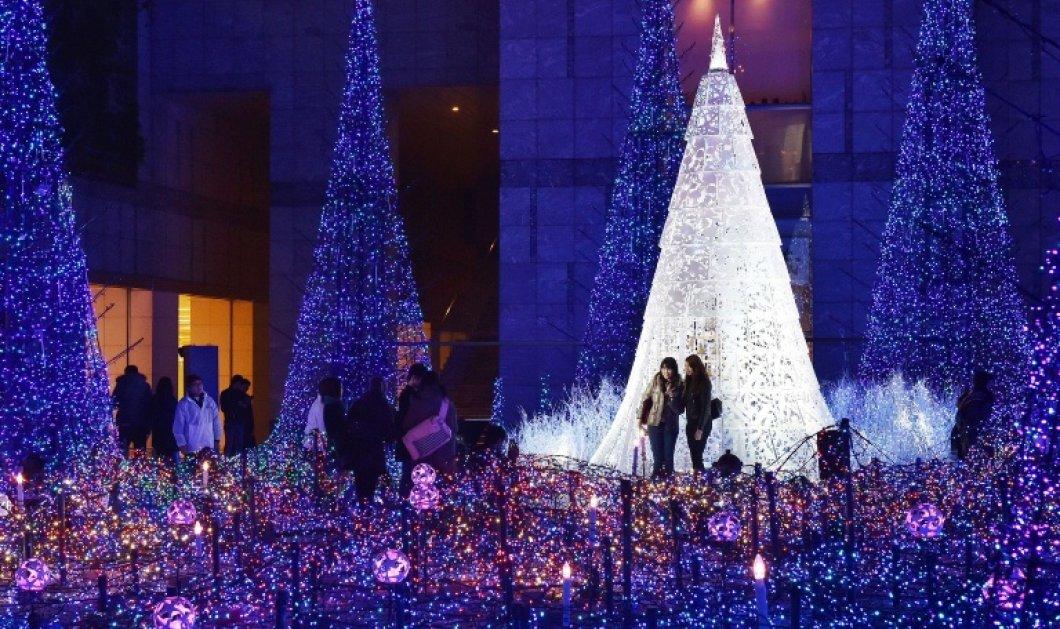 Δέντρα χριστουγεννιάτικα ή πρόβατα στον Πύργο του Άιφελ για την διάσωση των λύκων: η ματιά της ημέρας στον κόσμο! (Φωτό) - Κυρίως Φωτογραφία - Gallery - Video