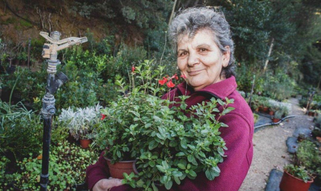 Μade In Greece η οικογένεια Παραγυιού που το φυτώριο της γίνεται θέμα στον διεθνή Τύπο! (φωτό) - Κυρίως Φωτογραφία - Gallery - Video