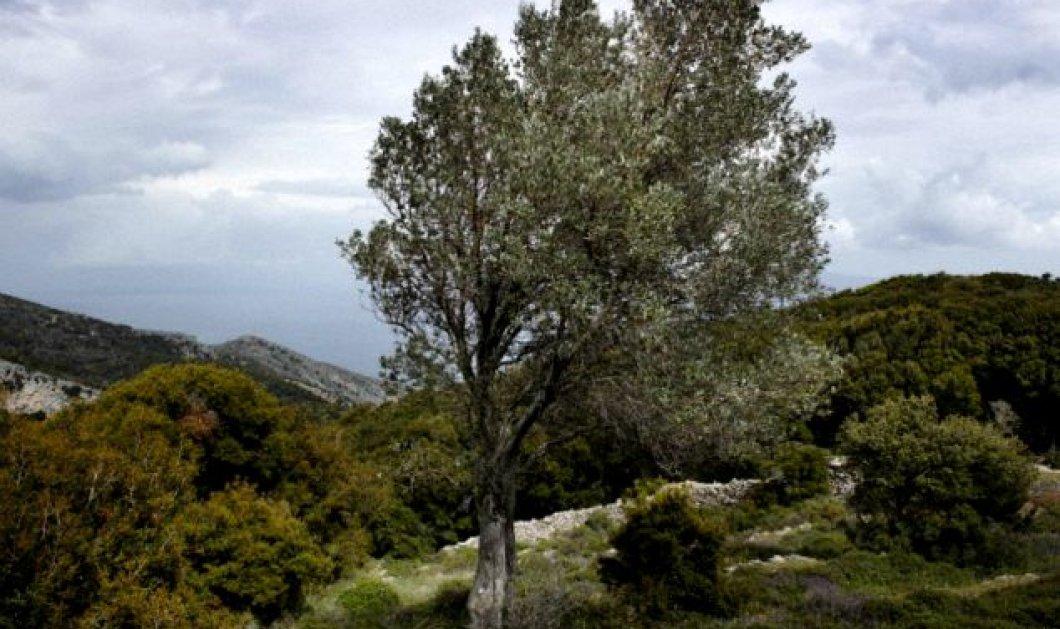 Αυτά είναι τα 4 μέρη του κόσμου όπου οι άνθρωποι ξεχνούν να... πεθάνουν! Ποιο ελληνικό μέρος συγκαταλέγεται ανάμεσά τους; - Κυρίως Φωτογραφία - Gallery - Video