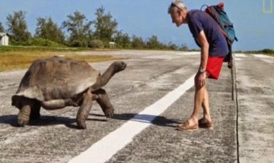 Βίντεο: Εξερευνητής του National Geographic διέκοψε τη χελώνα από τα συζυγικά της καθήκοντα και δείτε τι έγινε!  - Κυρίως Φωτογραφία - Gallery - Video