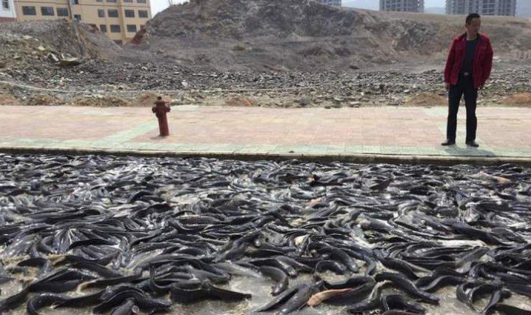 Βίντεο: 5 τόνοι ζωντανών ψαριών ''δραπέτευσαν'' από το φορτηγό που τα μετέφερε & προκάλεσαν χάος σε δρόμο της Κίνας!  - Κυρίως Φωτογραφία - Gallery - Video