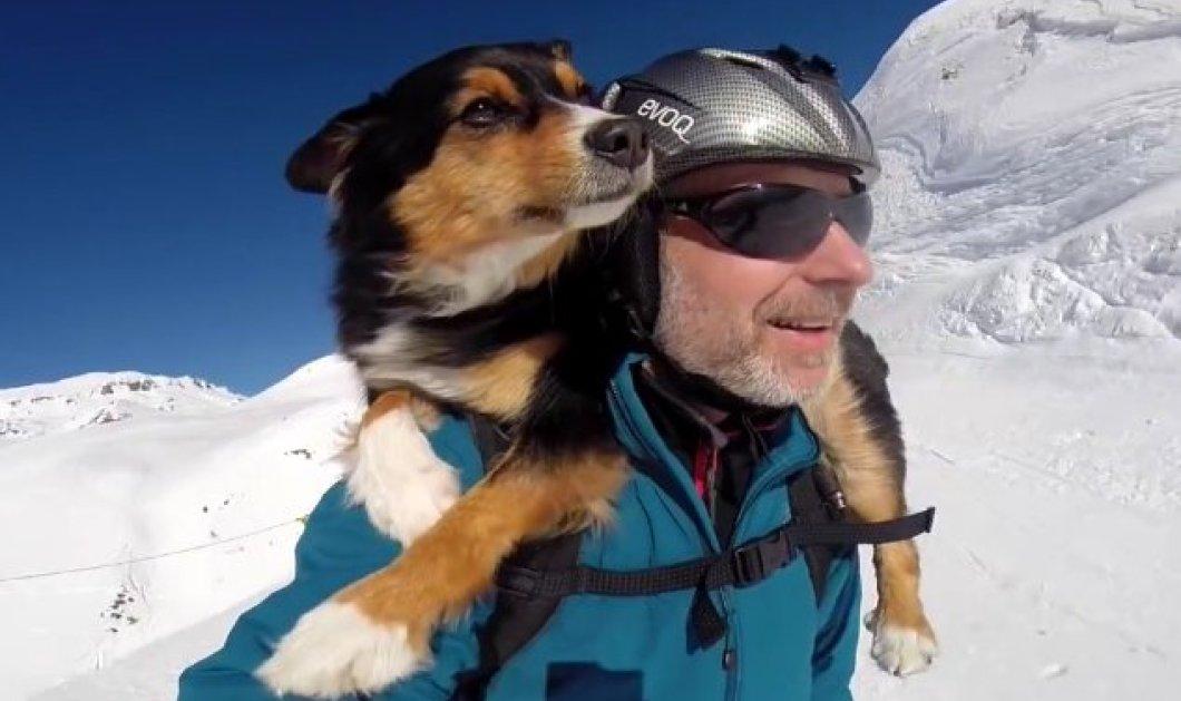 Βίντεο: Ο δεινός σκιερ παίρνει στην πλάτη του τον αγαπημένο του σκύλο και γλιστράει στο χιόνι.... - Κυρίως Φωτογραφία - Gallery - Video