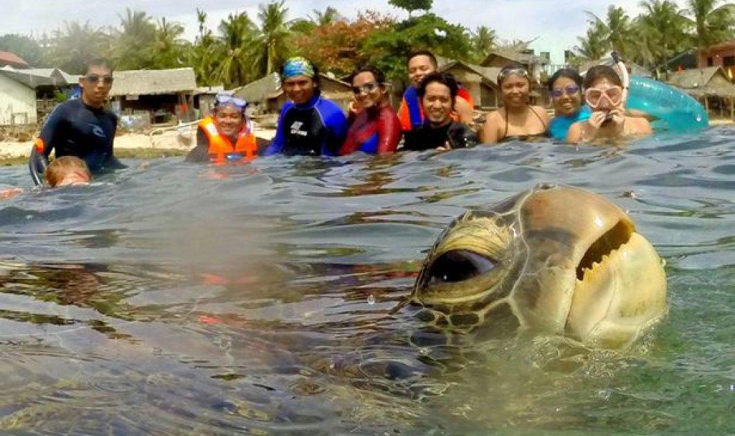 Smile: Ποιος είπε ότι και τα ζώα δεν βγαίνουν selfies - Δείτε την πιο αστεία από αυτήν την χελώνα - Κυρίως Φωτογραφία - Gallery - Video