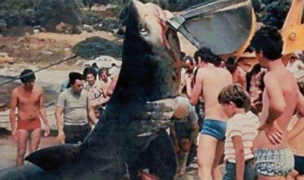 Vintage Story: Όταν το 1951 καρχαρίας κατασπάραξε την 16χρονη Βάντα στην Κέρκυρα & τραυμάτισε τον φίλο της - Κυρίως Φωτογραφία - Gallery - Video