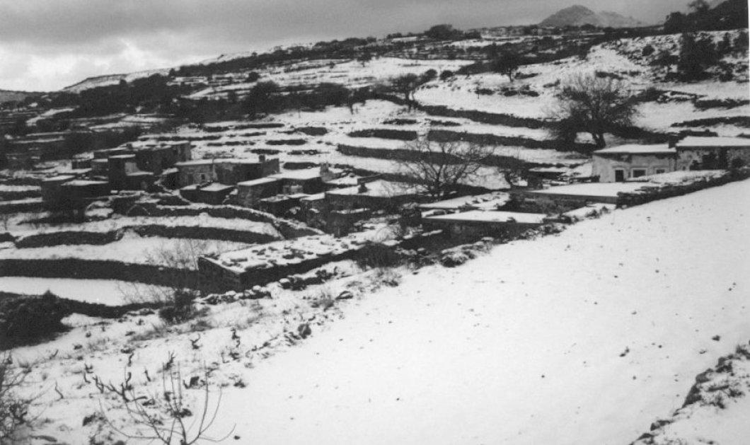 Η κινηματογραφική απόδραση Νορβηγού κατασκόπου: Κάλυψε 200 μίλια σε χιονισμένα βουνά, πηδώντας από δέντρο σε δέντρο για να μην αφήνει ίχνη στους Ναζί! - Κυρίως Φωτογραφία - Gallery - Video