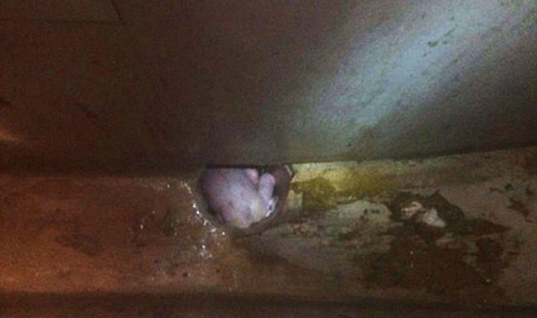 Κίνα: Νεογέννητο μωράκι βρέθηκε σε... υπόνομο! Η μητέρα του το έριξε στην τουαλέτα και τράβηξε το καζανάκι... (φωτό) - Κυρίως Φωτογραφία - Gallery - Video