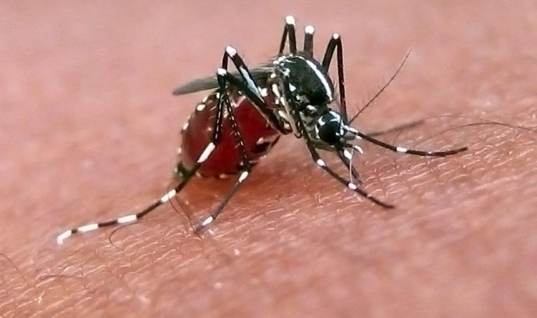 Σας τσιμπάνε τα κουνούπια; Φταίνε τα γονίδια & η μυρωδιά σας;  - Κυρίως Φωτογραφία - Gallery - Video