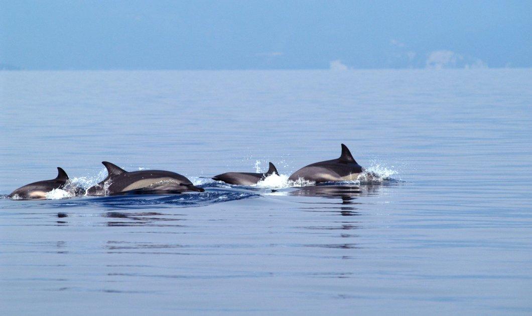 Good News: Μικρά δελφίνια μαγνητίζουν του Θεσσαλονικιούς - κόβουν βόλτες στα νερά του Θερμαικού - Κυρίως Φωτογραφία - Gallery - Video
