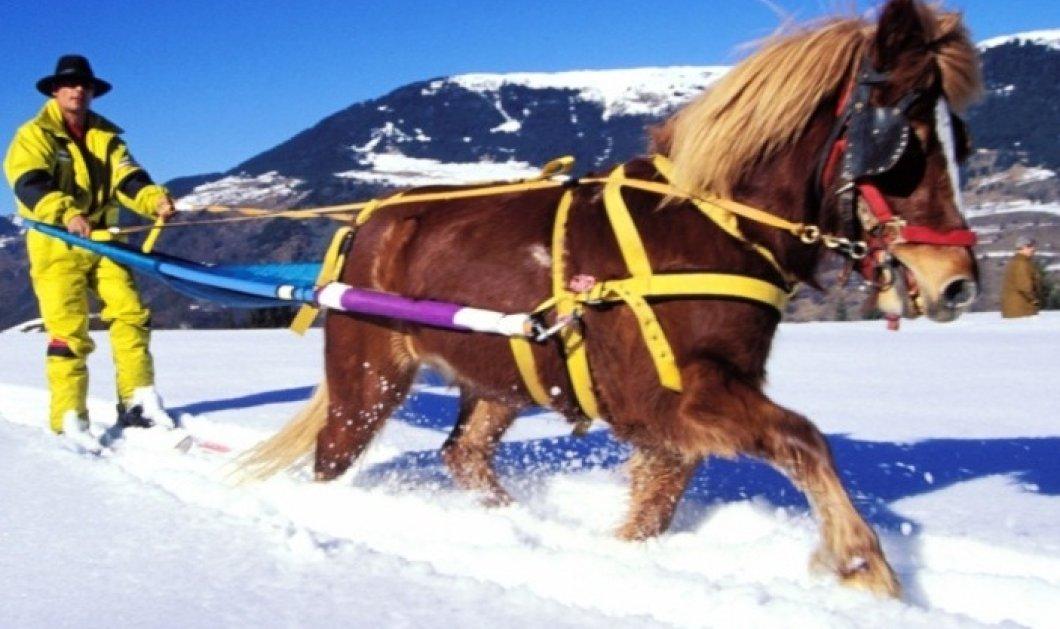 8 μοναδικοί, εναλλακτικοί τρόποι για να απολαύσετε το χιόνι: Ποδήλατα, άλογα και πατίνια! - Κυρίως Φωτογραφία - Gallery - Video