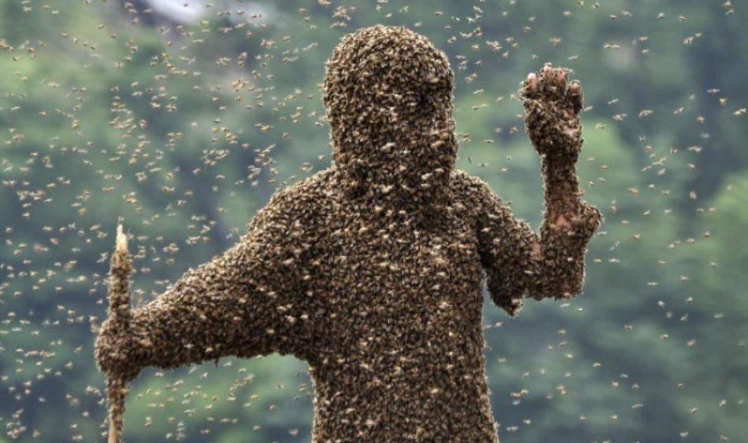 Story: Του επιτέθηκαν 50.000 μέλισσες, υπέστη χίλια τσιμπήματα - Κλείστηκαν όλοι στα σπίτια τους - Κυρίως Φωτογραφία - Gallery - Video